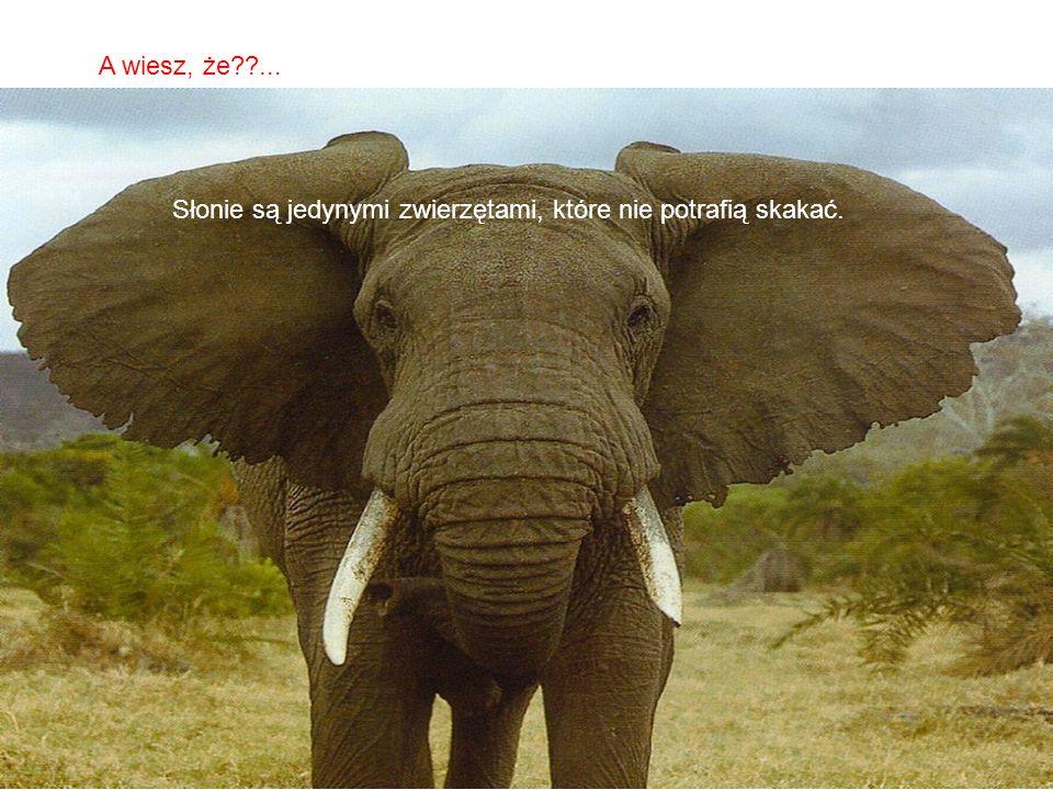 Słonie są jedynymi zwierzętami, które nie potrafią skakać.