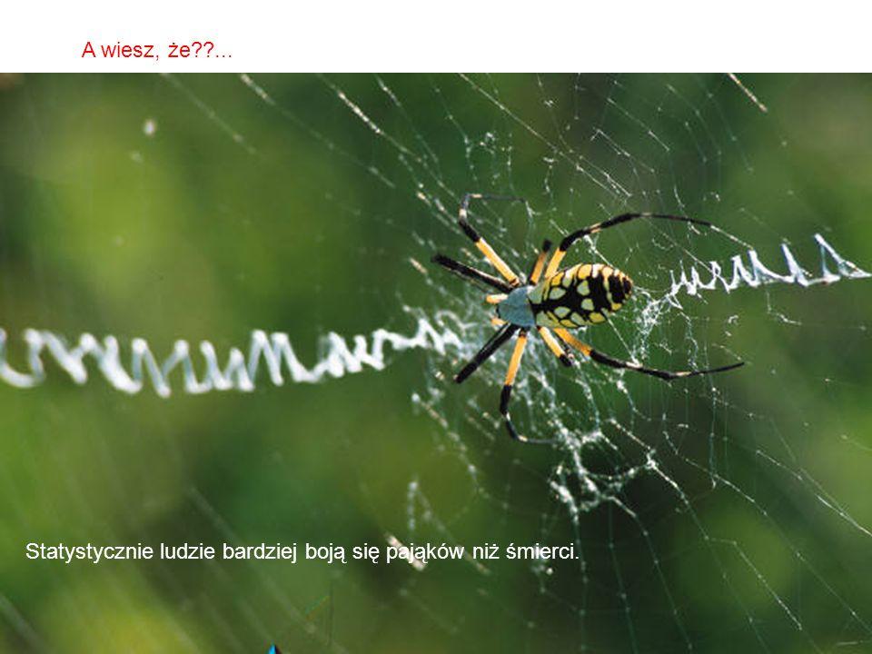 A wiesz, że ... Statystycznie ludzie bardziej boją się pająków niż śmierci.
