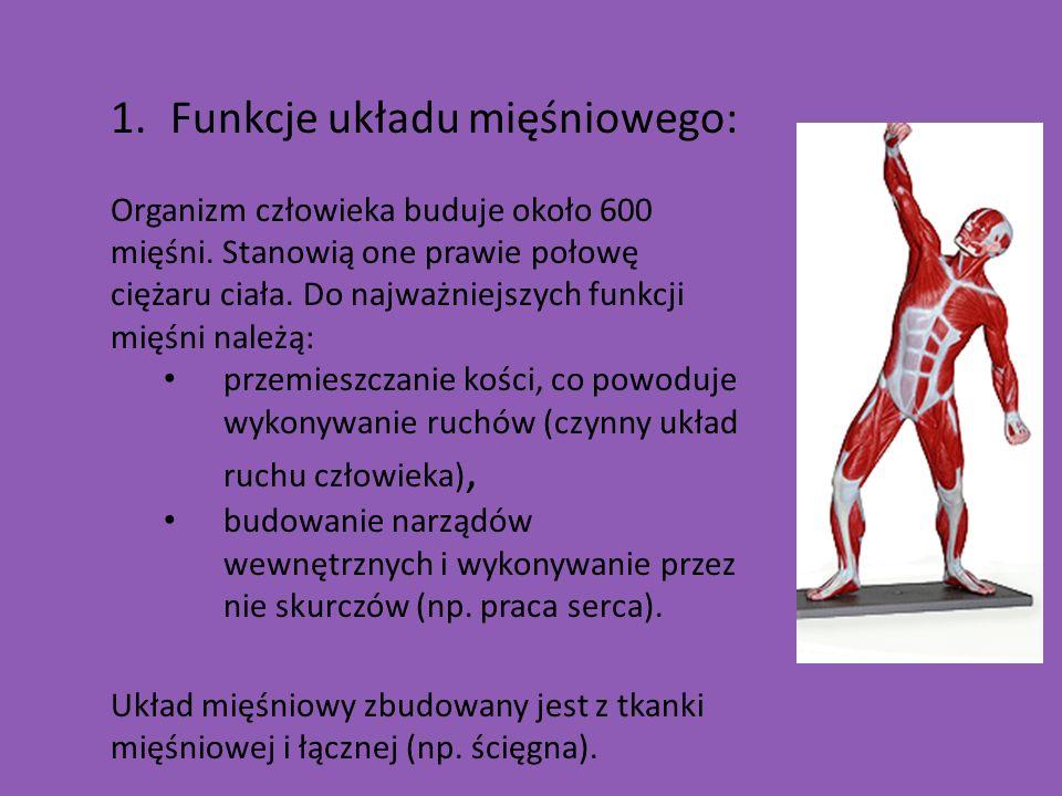 Funkcje układu mięśniowego: