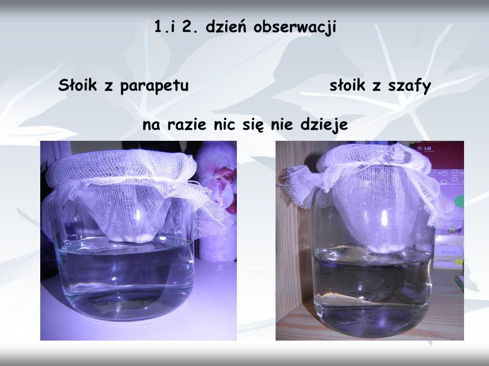 1.i 2. dzień obserwacji Słoik z parapetu słoik z szafy.