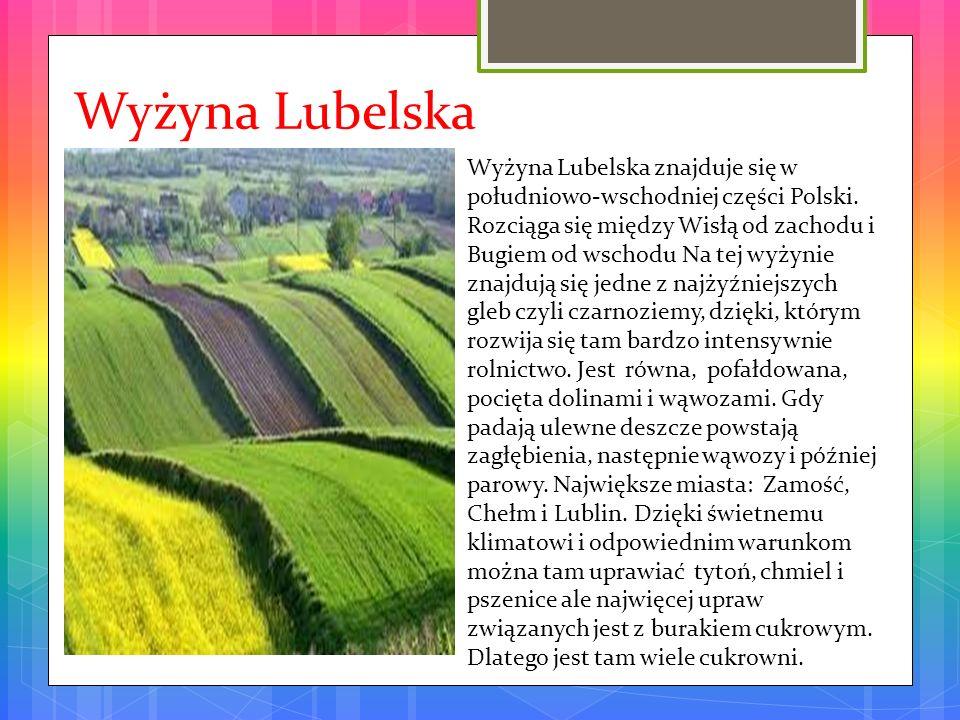 Wyżyna Lubelska