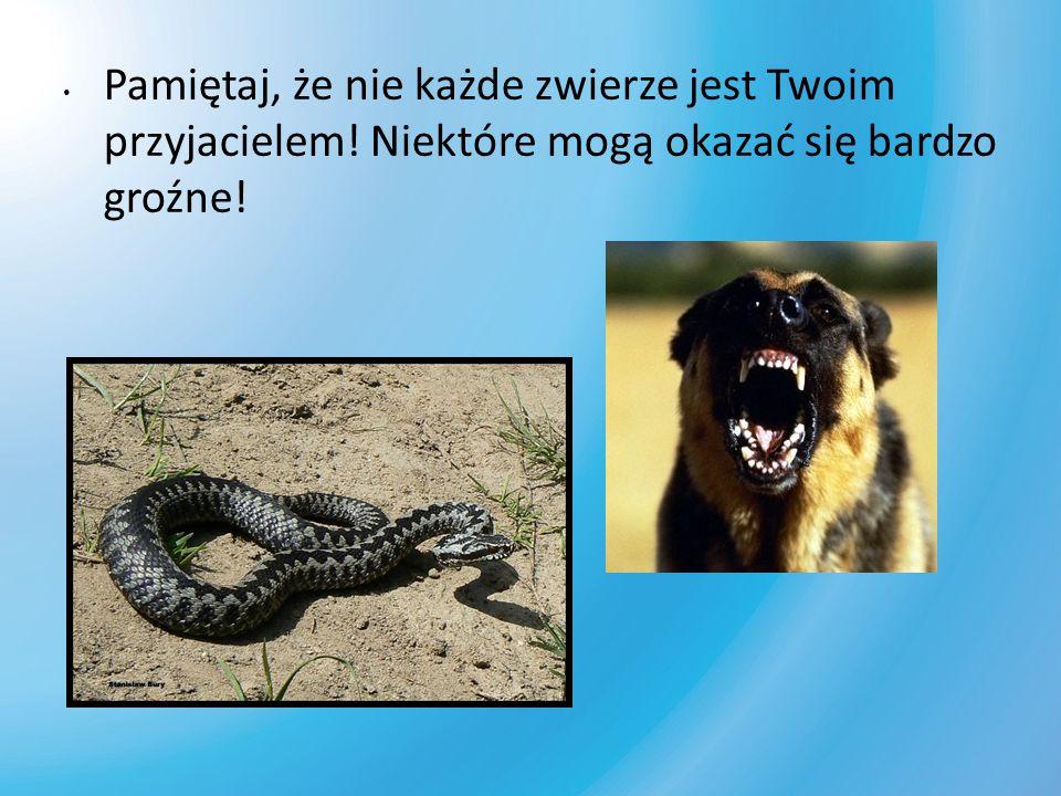 Pamiętaj, że nie każde zwierze jest Twoim przyjacielem