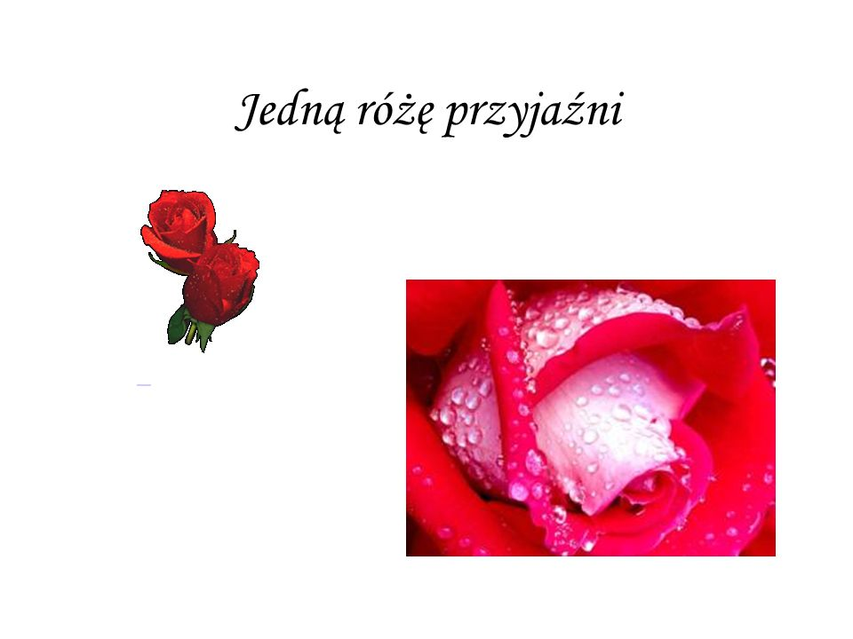 Jedną różę przyjaźni