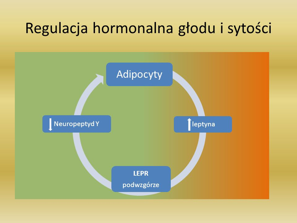 Regulacja hormonalna głodu i sytości