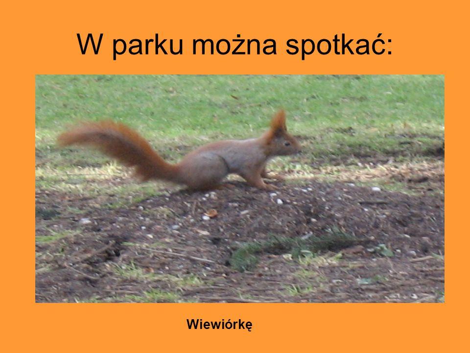 W parku można spotkać: Wiewiórkę