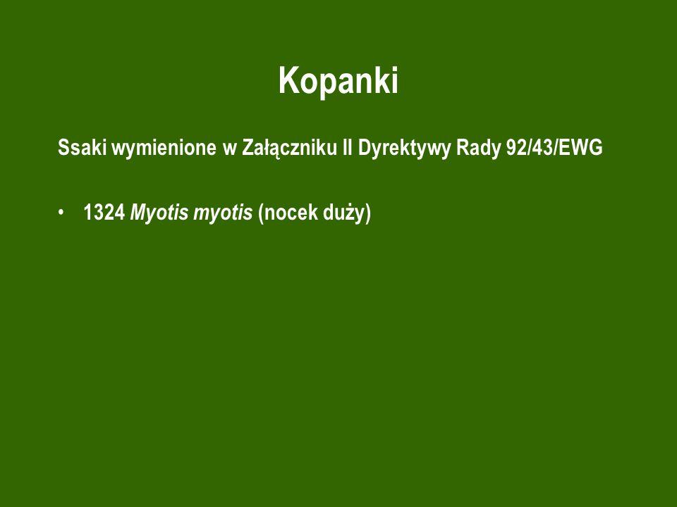 Kopanki Ssaki wymienione w Załączniku II Dyrektywy Rady 92/43/EWG