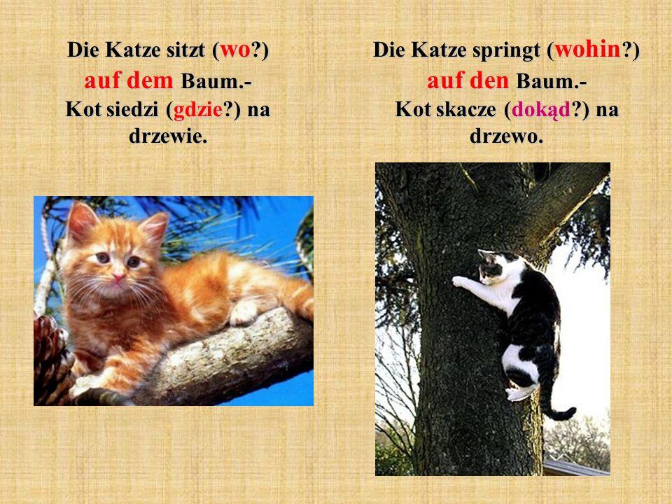 Die Katze sitzt (wo ) auf dem Baum.- Kot siedzi (gdzie ) na drzewie.