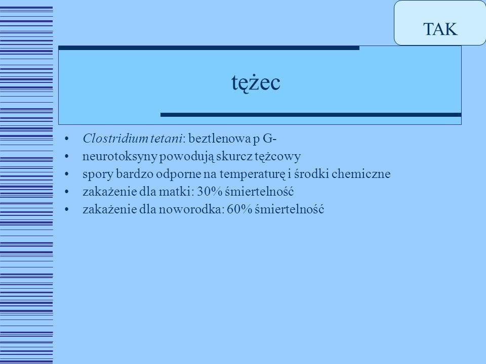 TAK tężec Clostridium tetani: beztlenowa p G-