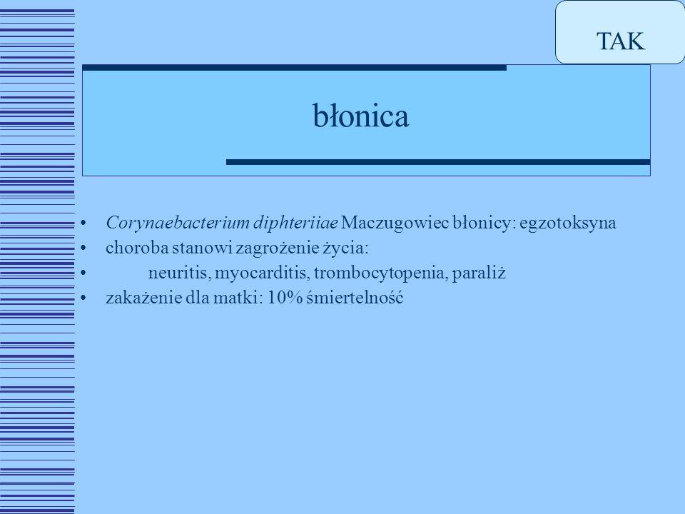 TAK błonica. Corynaebacterium diphteriiae Maczugowiec błonicy: egzotoksyna. choroba stanowi zagrożenie życia: