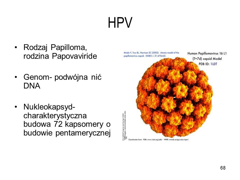 HPV Rodzaj Papilloma, rodzina Papovaviride Genom- podwójna nić DNA