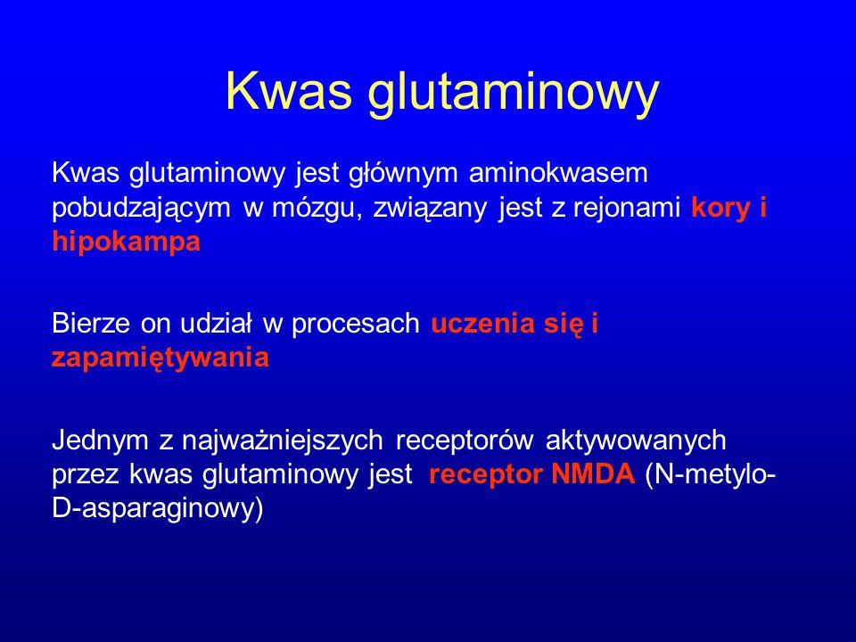 Kwas glutaminowy Kwas glutaminowy jest głównym aminokwasem pobudzającym w mózgu, związany jest z rejonami kory i hipokampa.