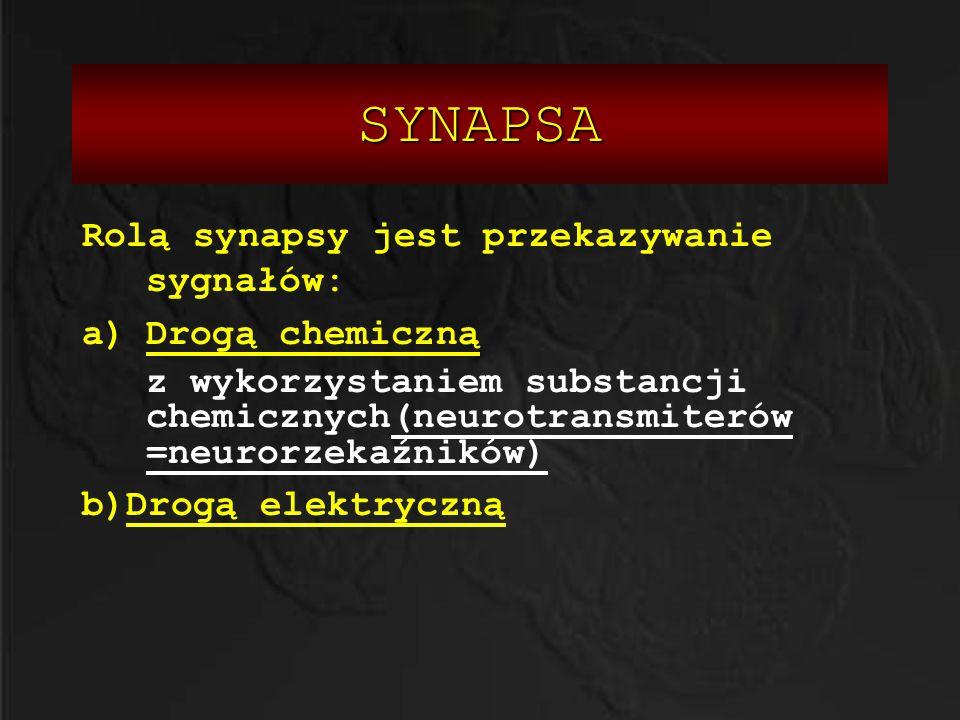 SYNAPSA Rolą synapsy jest przekazywanie sygnałów: Drogą chemiczną