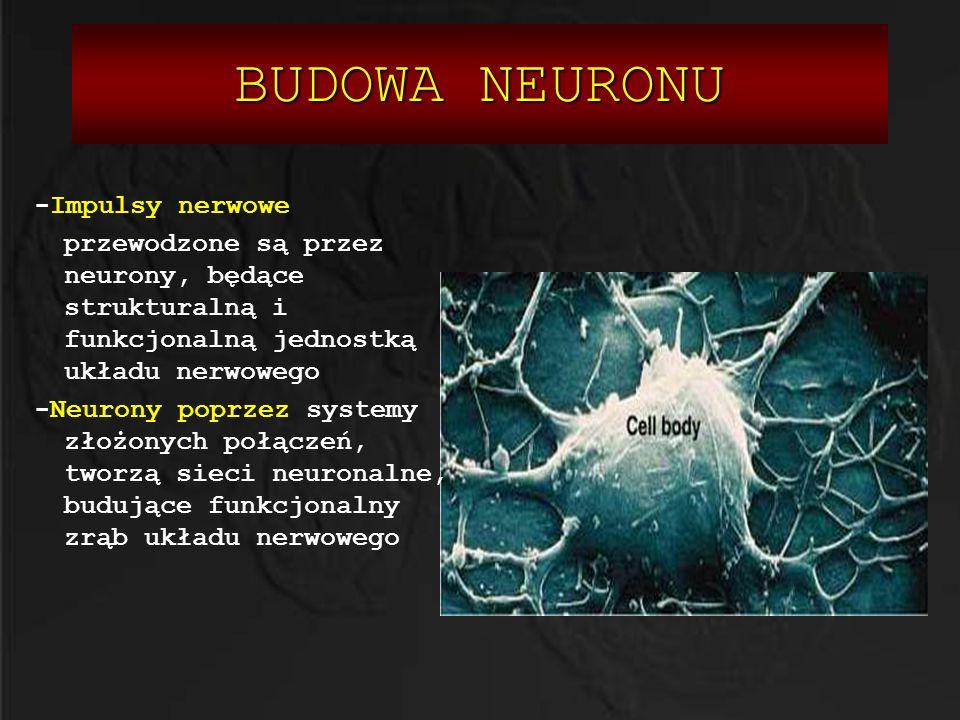 BUDOWA NEURONU -Impulsy nerwowe