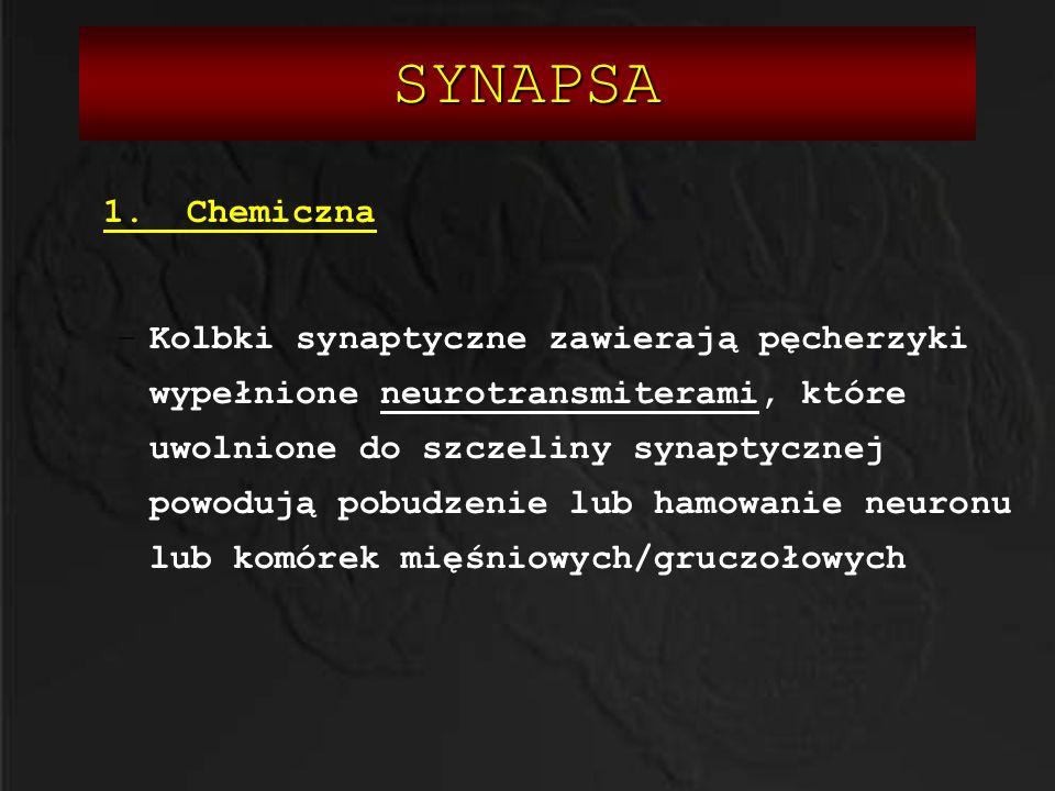 SYNAPSA 1. Chemiczna.