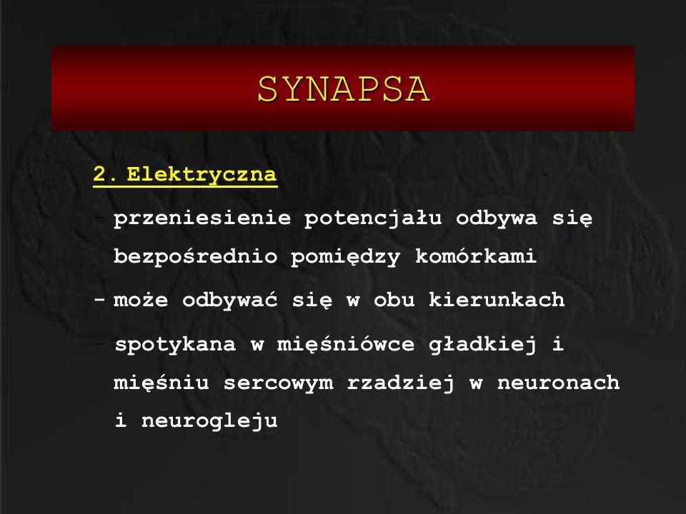 SYNAPSA 2. Elektryczna. przeniesienie potencjału odbywa się bezpośrednio pomiędzy komórkami. - może odbywać się w obu kierunkach.