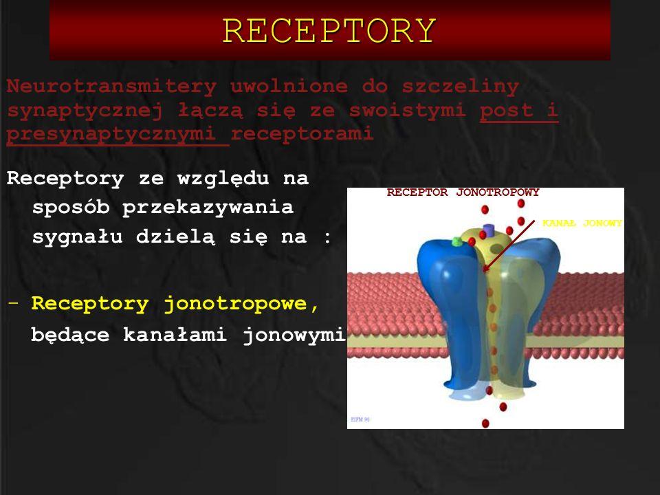 RECEPTORY Neurotransmitery uwolnione do szczeliny synaptycznej łączą się ze swoistymi post i presynaptycznymi receptorami.
