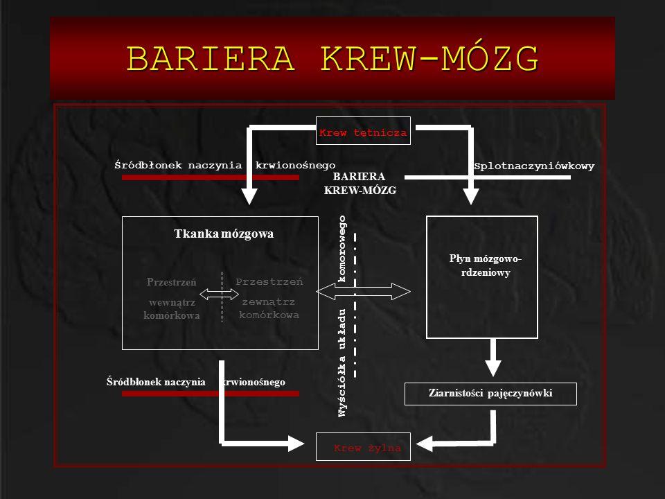 BARIERA KREW-MÓZG Tkanka mózgowa Krew tętnicza Krew żylna