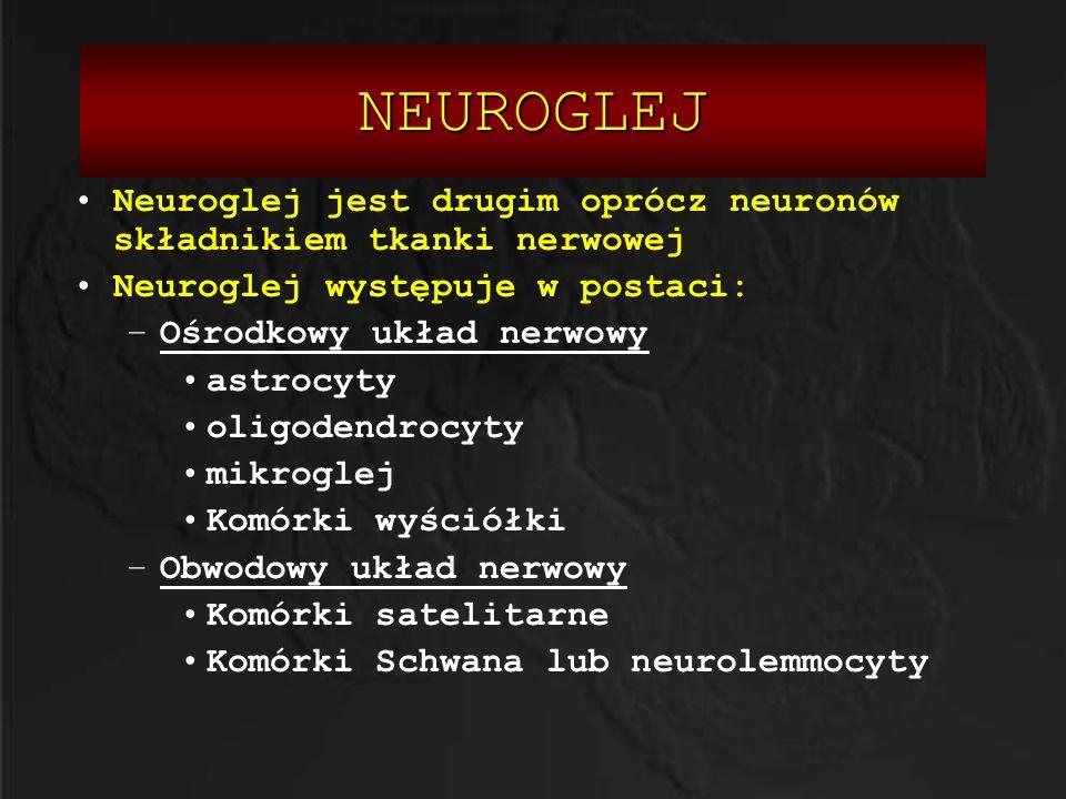 NEUROGLEJ Neuroglej jest drugim oprócz neuronów składnikiem tkanki nerwowej. Neuroglej występuje w postaci: