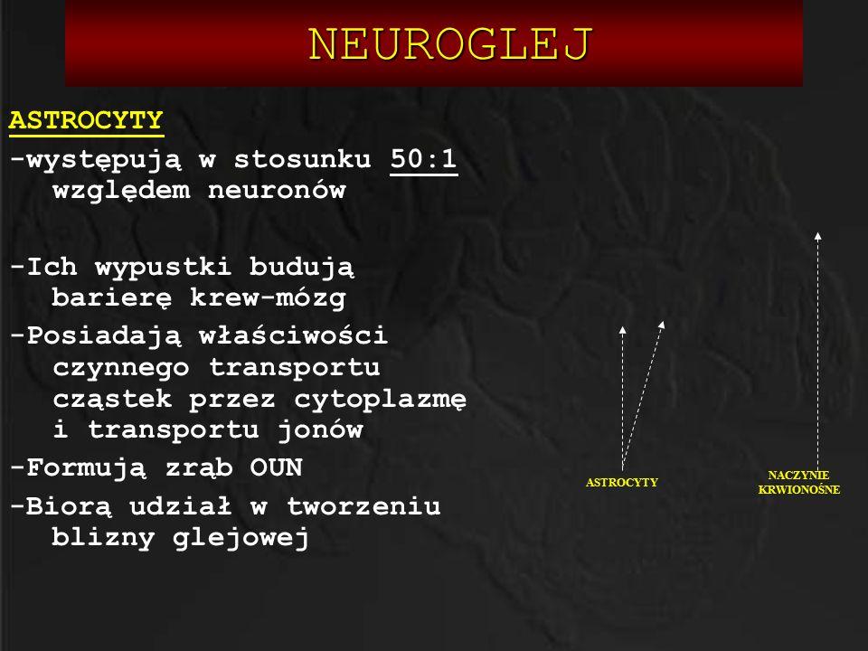 NEUROGLEJ ASTROCYTY -występują w stosunku 50:1 względem neuronów