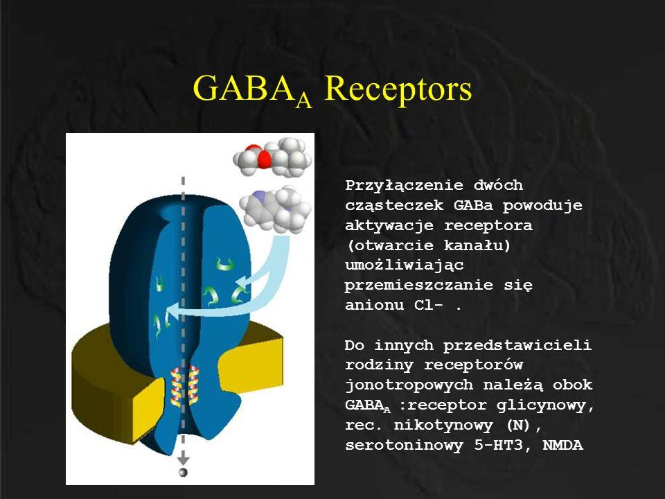 GABAA Receptors Przyłączenie dwóch cząsteczek GABa powoduje aktywacje receptora (otwarcie kanału) umożliwiając przemieszczanie się anionu Cl- .