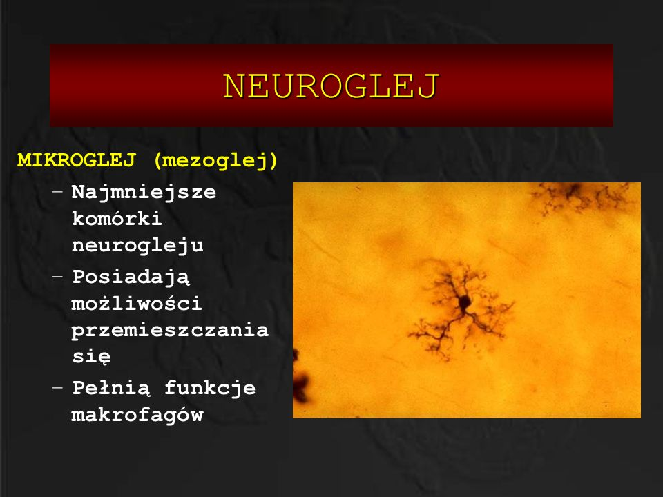 NEUROGLEJ MIKROGLEJ (mezoglej) Najmniejsze komórki neurogleju