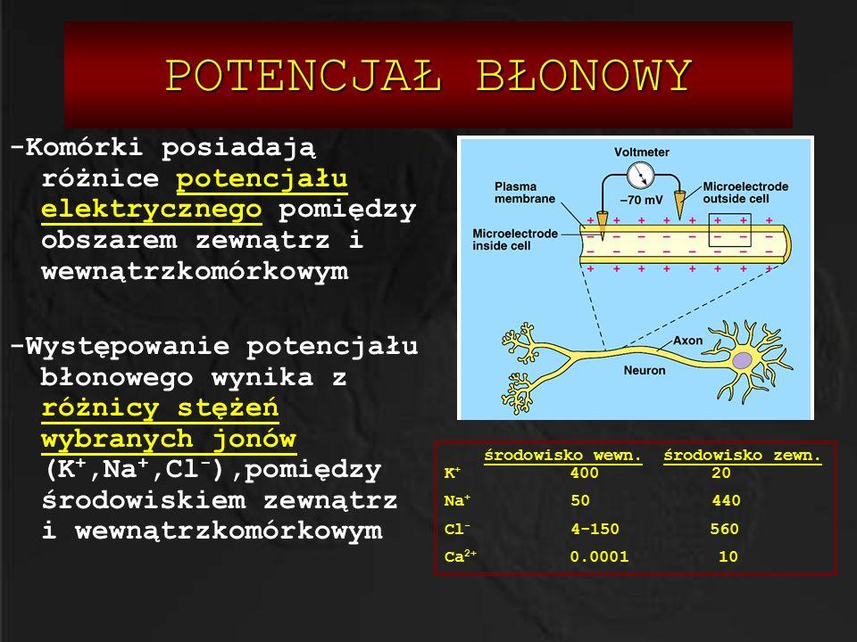 POTENCJAŁ BŁONOWY -Komórki posiadają różnice potencjału elektrycznego pomiędzy obszarem zewnątrz i wewnątrzkomórkowym.