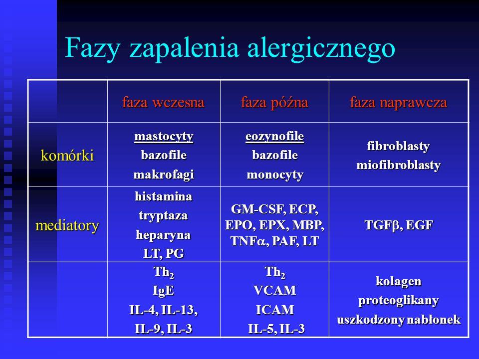 Fazy zapalenia alergicznego