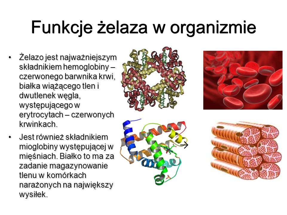 Funkcje żelaza w organizmie