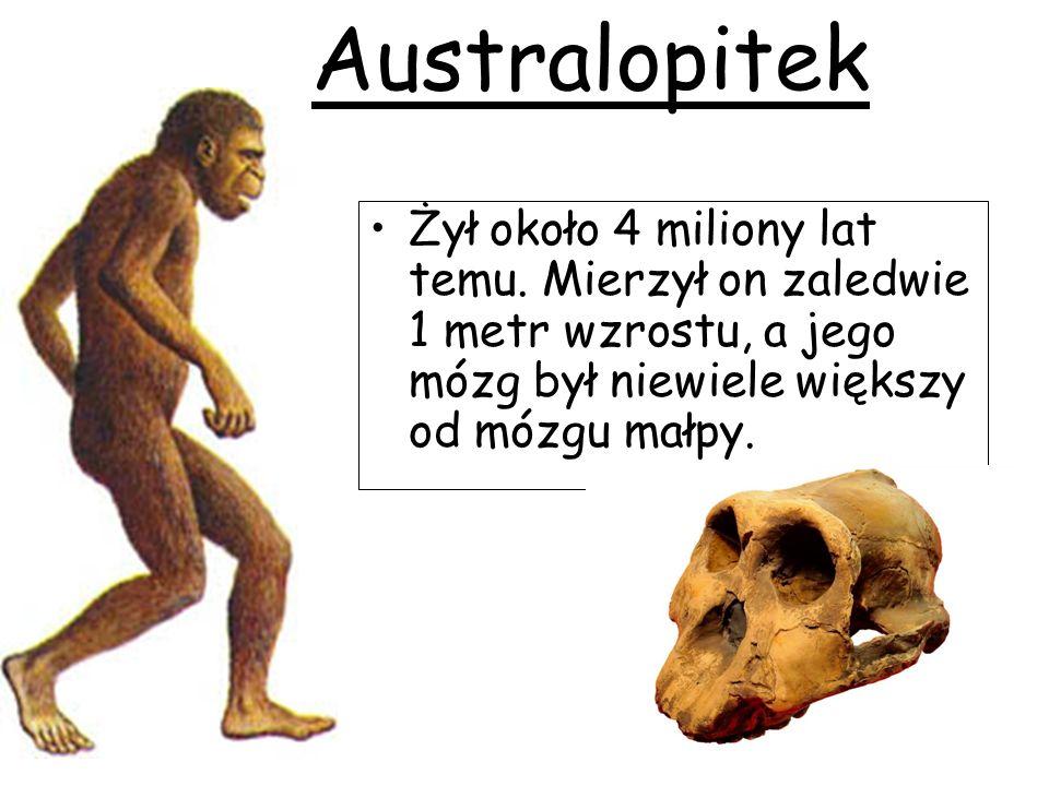 Australopitek Żył około 4 miliony lat temu.