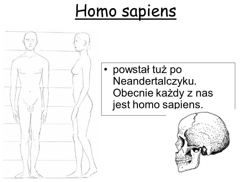 Homo sapiens powstał tuż po Neandertalczyku. Obecnie każdy z nas jest homo sapiens.
