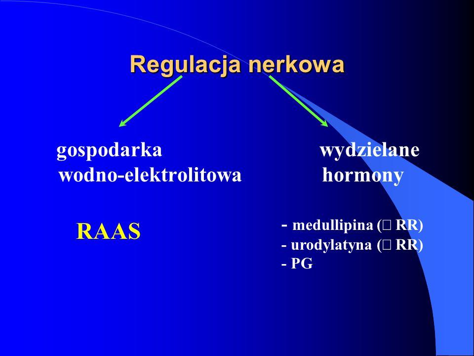 Regulacja nerkowa RAAS