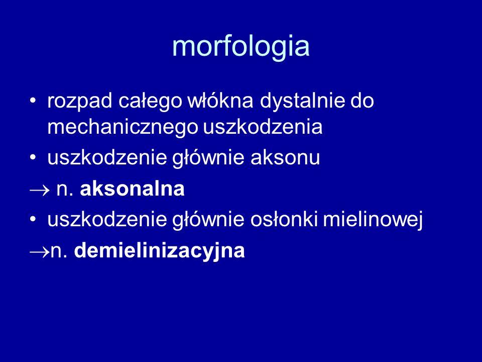 morfologia rozpad całego włókna dystalnie do mechanicznego uszkodzenia