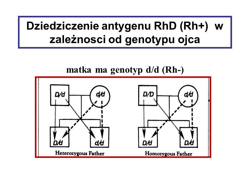 Dziedziczenie antygenu RhD (Rh+) w zależnosci od genotypu ojca