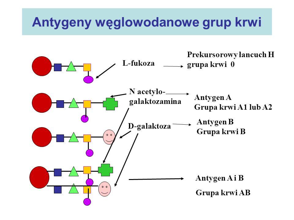 Antygeny węglowodanowe grup krwi