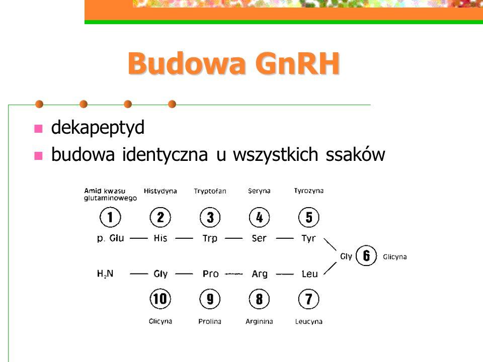 Budowa GnRH dekapeptyd budowa identyczna u wszystkich ssaków