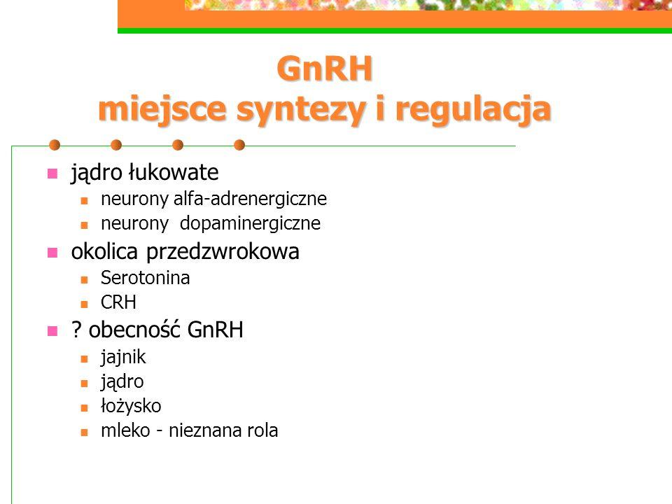 GnRH miejsce syntezy i regulacja