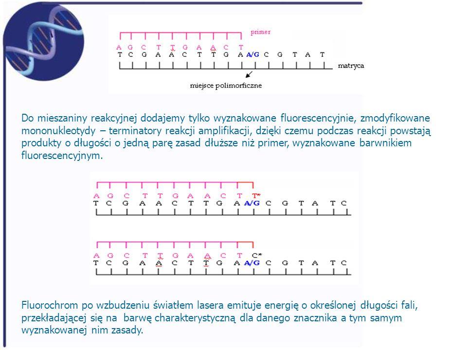 Do mieszaniny reakcyjnej dodajemy tylko wyznakowane fluorescencyjnie, zmodyfikowane mononukleotydy – terminatory reakcji amplifikacji, dzięki czemu podczas reakcji powstają produkty o długości o jedną parę zasad dłuższe niż primer, wyznakowane barwnikiem fluorescencyjnym.