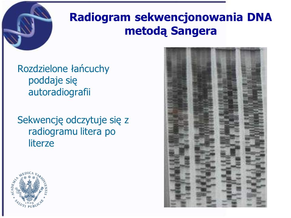 Radiogram sekwencjonowania DNA metodą Sangera