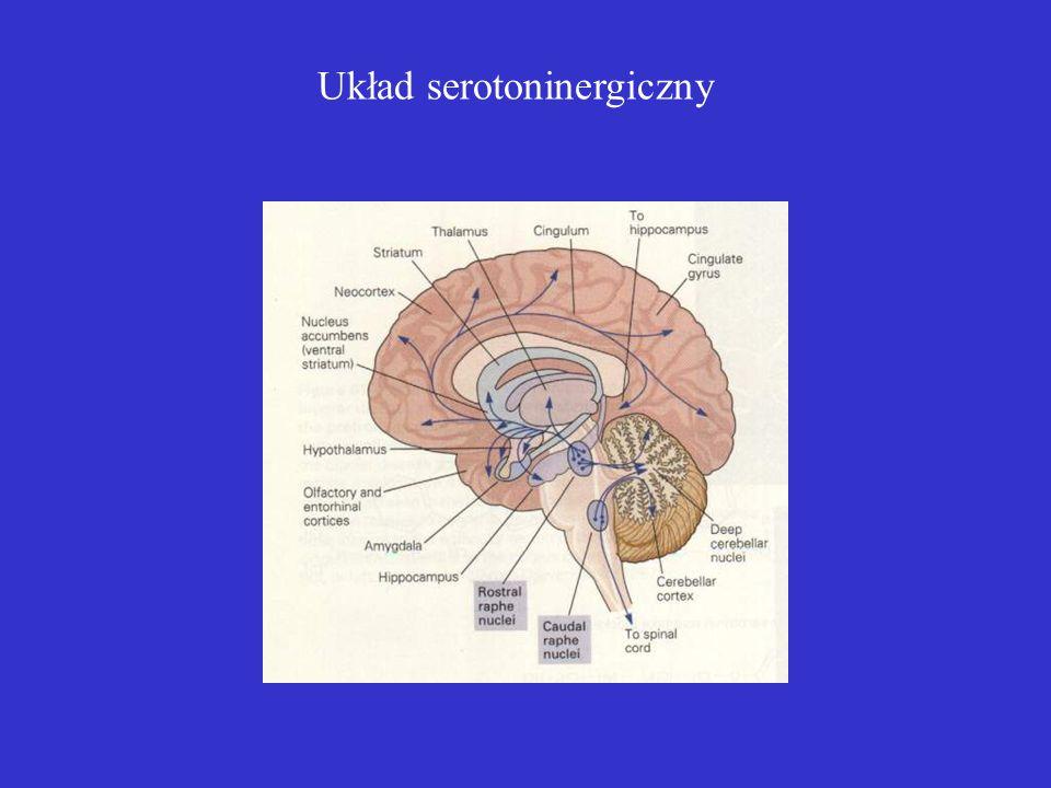 Układ serotoninergiczny
