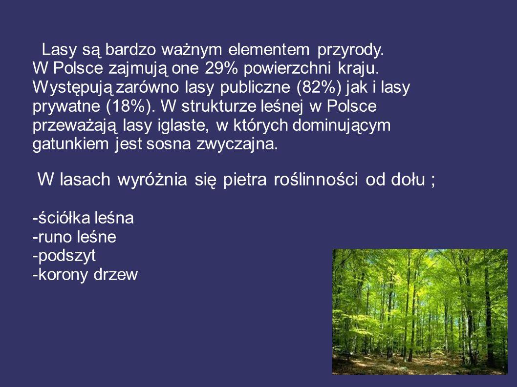 W lasach wyróżnia się pietra roślinności od dołu ;