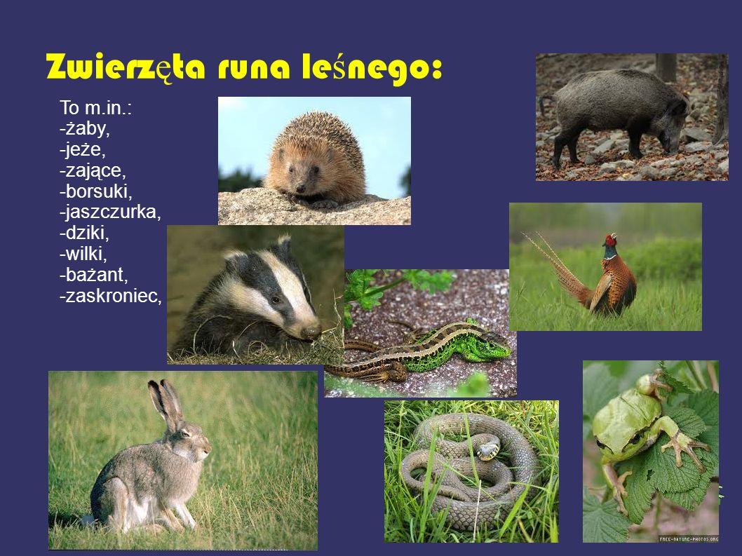 Zwierzęta runa leśnego: