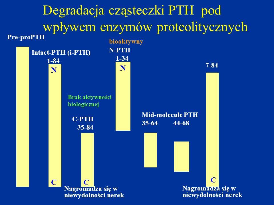 Degradacja cząsteczki PTH pod wpływem enzymów proteolitycznych