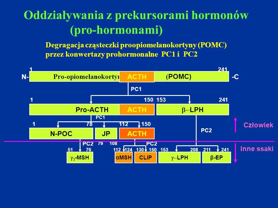 Degragacja cząsteczki proopiomelanokortyny (POMC)