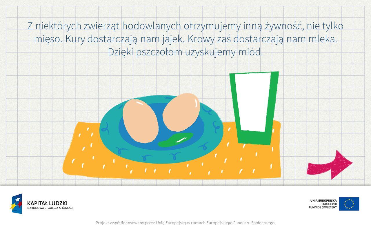 Z niektórych zwierząt hodowlanych otrzymujemy inną żywność, nie tylko mięso. Kury dostarczają nam jajek. Krowy zaś dostarczają nam mleka. Dzięki pszczołom uzyskujemy miód.