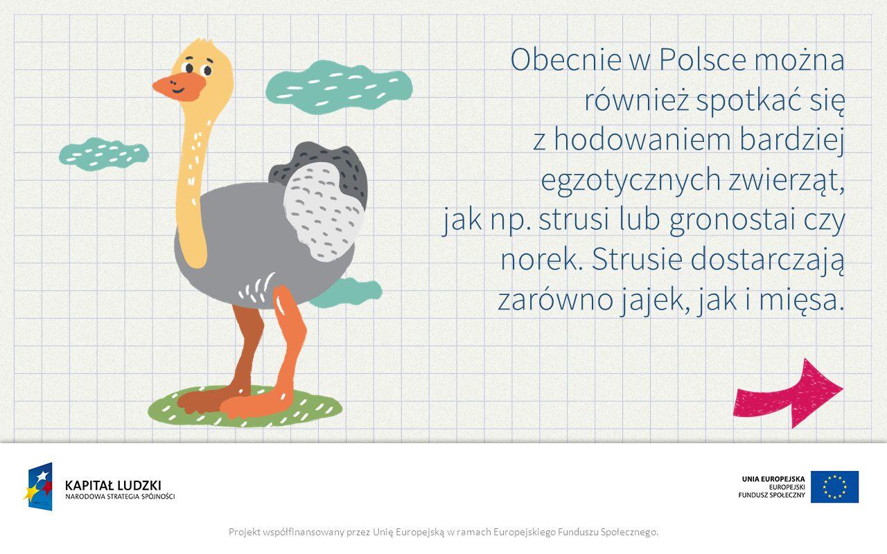 Obecnie w Polsce można również spotkać się z hodowaniem bardziej egzotycznych zwierząt, jak np. strusi lub gronostai czy norek. Strusie dostarczają zarówno jajek, jak i mięsa.