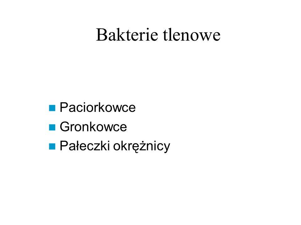 Bakterie tlenowe Paciorkowce Gronkowce Pałeczki okrężnicy
