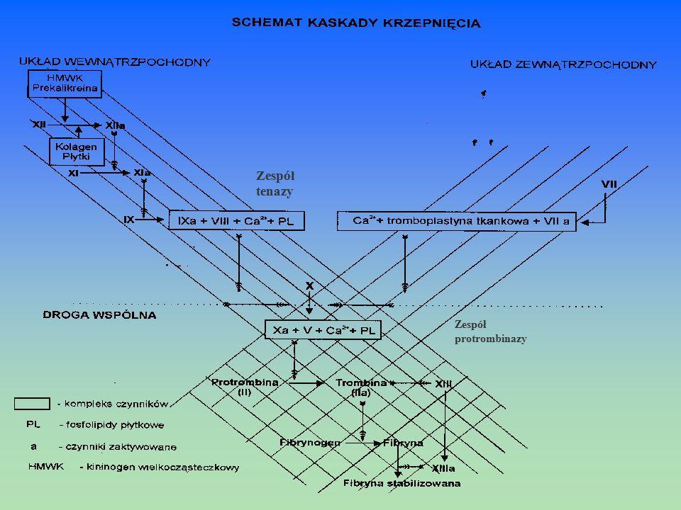Zespół tenazy Zespół protrombinazy