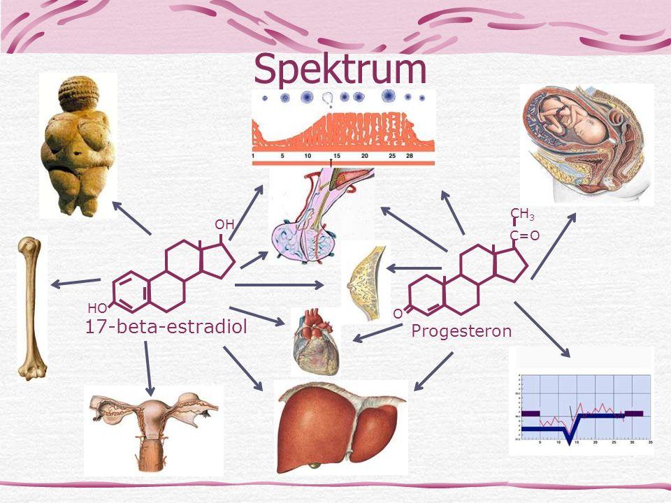 Spektrum 17-beta-estradiol Progesteron CH3 OH C=O HO O 1. Estrogeny
