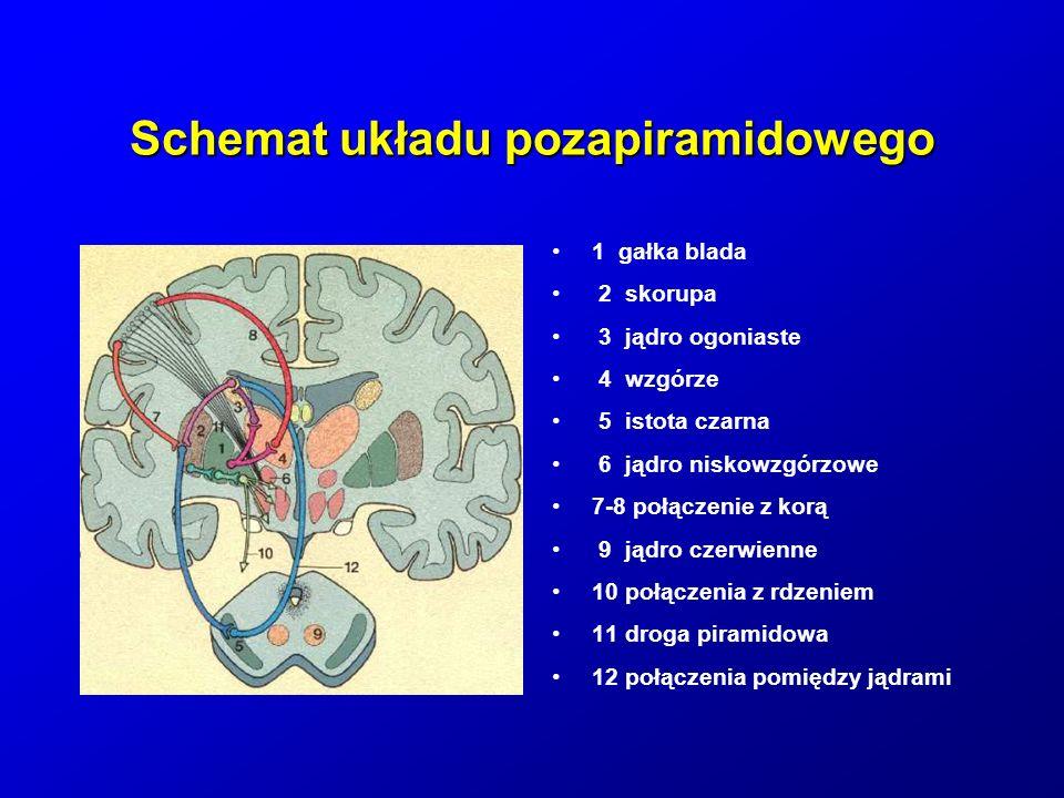 Schemat układu pozapiramidowego
