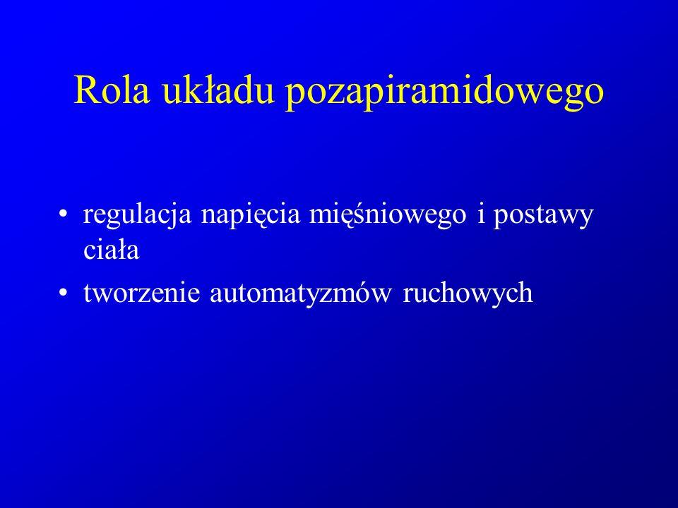 Rola układu pozapiramidowego
